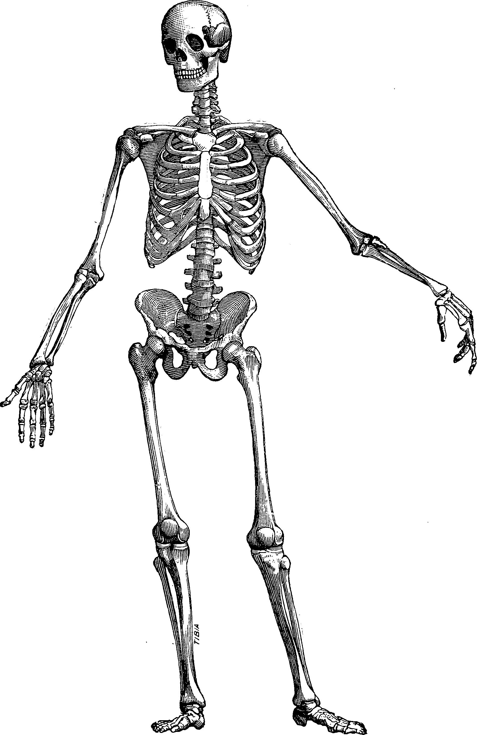 The Skeleton Key Dismantle Abigail Rose Clarke